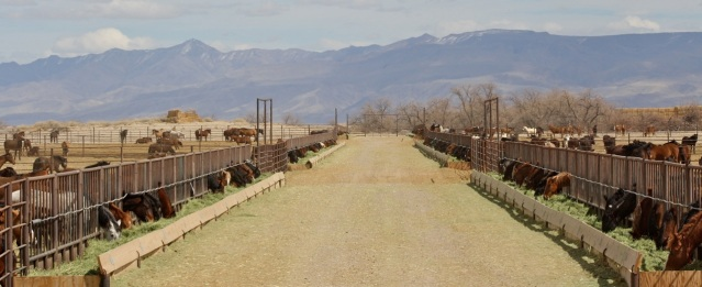 "BLM wild horse ""storage facility"" in Fallon, Broken Arrow (aka Indian Lakes) 2012"