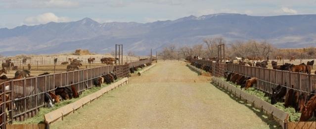 """BLM wild horse """"storage facility"""" in Fallon, Broken Arrow (aka Indian Lakes) 2012"""