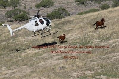 Antelope 2012