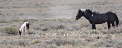 "A little ""wild angel"" now nothing more than a statistic from the zero out of the last of the Sheldon Mustangs. This removal was like no other with the ongoing drama and callous behavior that ranged far and wide."