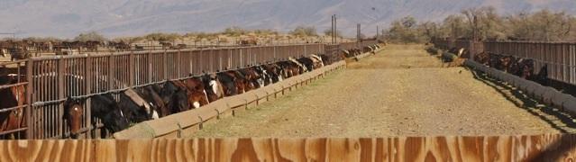 Broken Arrow wild horse warehousing in Fallon, NV. Copyright 2012 Laura