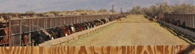Wild horses stockpiled to facilitate public land grazing under
