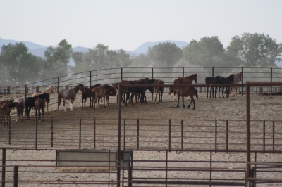 The TRUTH is that almost twice as many wild horses are warehoused by BLM then exist on the range.