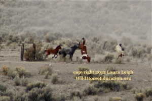 Horse flipping over barbed wire at the Owyhee Complex roundup