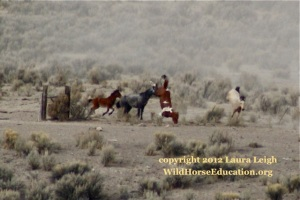"According to BLM these horses simply ""tripped."" ""No horses were run through barbed wire at Owyhee"" ~ BLM in court documents"