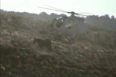 Chopper coming in contact with wild horse at Triple B in August 2011