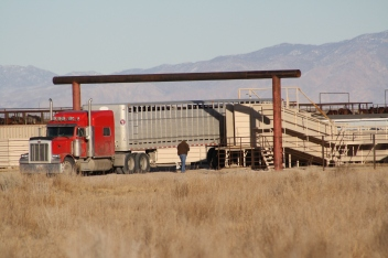 "Wild horses offloading into the ""closed to the public"" facility Broken Arrow after capture from the range out of public site"