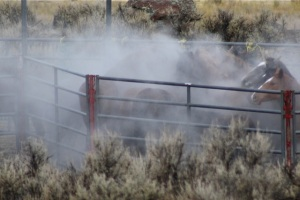"""Owyhee trapsite at temperatures in the teens, ask them if BLM has """"reformed."""""""