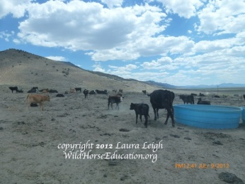 """Water hauls on public land to facilitate cattle. Does this look like a """"good steward"""" to you?"""