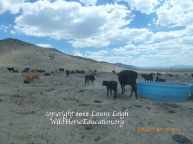 "Water hauls on public land to facilitate cattle. Does this look like a ""good steward"" to you?"