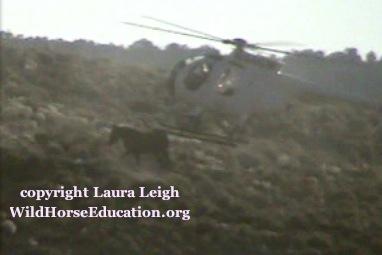 shot2_leigh-1