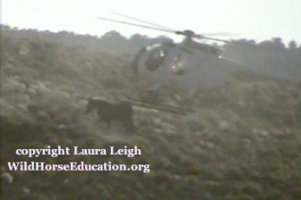 Horse hit with chopper Triple B