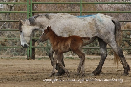 Mare and foal await return to Diamond Range