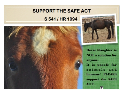 Support the SAFE Act and protect all horses, wild and domestic, from slaughter!