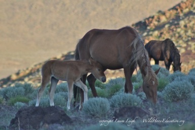 Mare and foal, 5/26