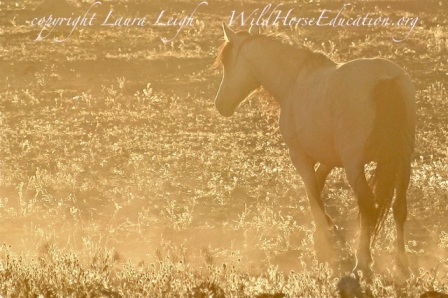 "Could there actually be good news in the NAS report for wild horses as they stand at the ""golden hour"" before dark?"