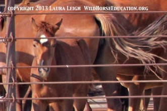 Unbranded McDermitt horses at auction