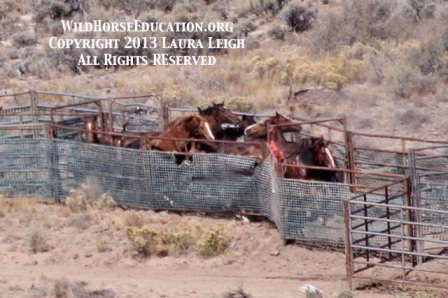 Photo taken at trap two on 9/11. Full zoom with 300mm lens and full digital enhancement. Condition of horses (injuries) can not be determined