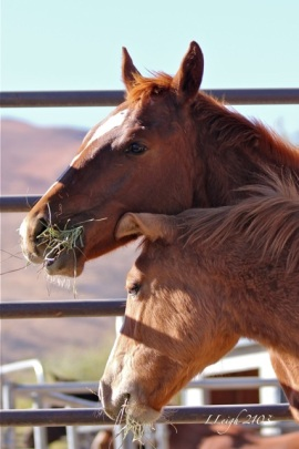 Faith and Dawn. In the care of Wild Horse Education