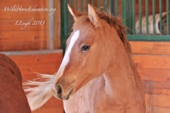 Dawn, sweet little filly that has lost home and family (we hope we can give her some TLC)