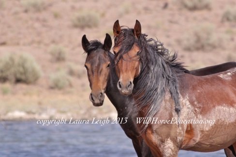 Today is the 42 Anniversary of the Act intended to protect our majestic wild horses