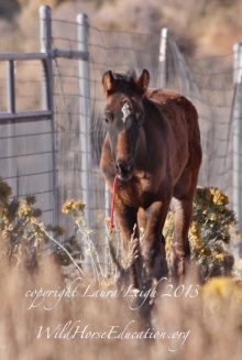 "We give thanks for baby Kidron, the Sheldon foal, we were able to help along with her mom ""Rosie the Riveter."""