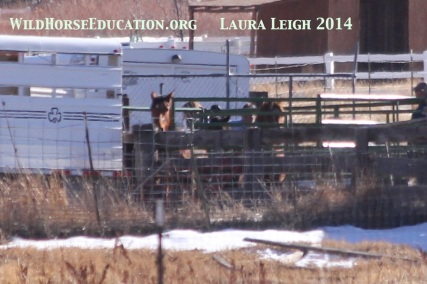 Panel being pushed toward horses forcing them onto trailer... and on their way to the prison