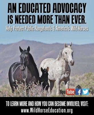 Support WHE in our mission to protect rangeland health and wild horses and burros. Click Image above.