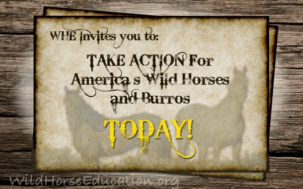 """Wild Horse Wednesday"" Invitation to ACTION"