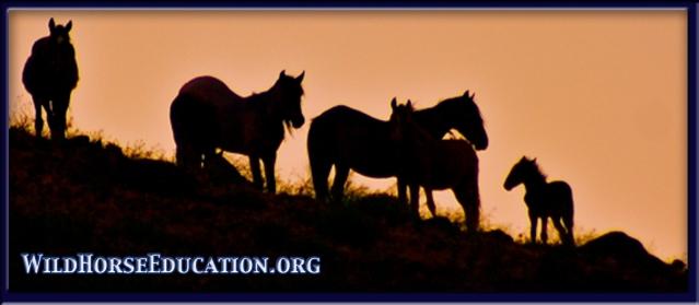 Wild Horse family in Nevada