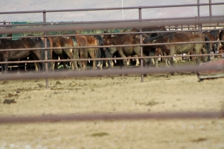 The program today has more wild horses and burros in captivity than in the wild. Roundup methods are under scrutiny and wild horses are still being removed to favor private interests.
