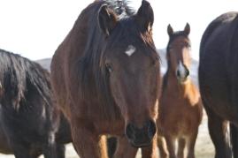 Owyhee stallion designated for