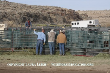 Temporary holding at Nevada BLM wild horse roundup. Observers could not approach the foal pen.