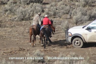 "Run to collapse under BLM ""humane handling memo"" at Owyhee"