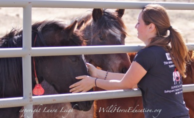 Fillies available onsite at Palomino Valley Center, a visit with a friend