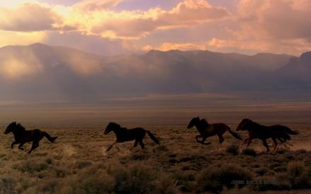 Elusive and Free Wild Horses
