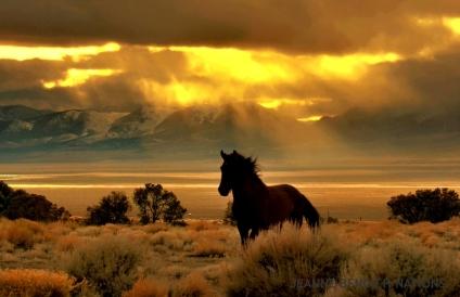 High Desert Gold