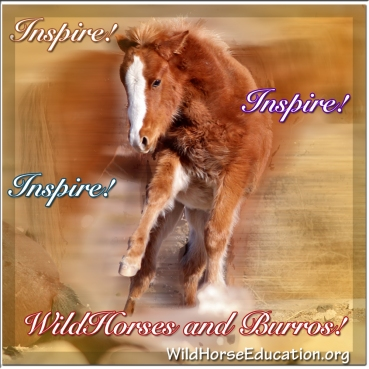 Wild Horses and Burros Inspire!