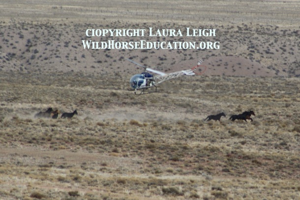 Roundup of wild horses in Iron County 2010