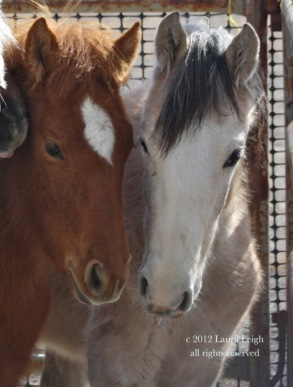 "Three Strikes"" (Adoption and Sale Authority) – Wild Horse"