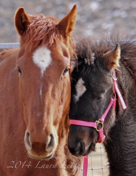 Rosie, and the baby that may have saved her from slaughter, Kidron