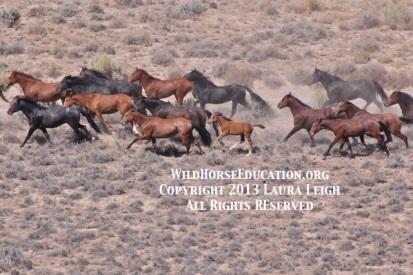 9/11/2013 Sheldon National Wildlife Refuge