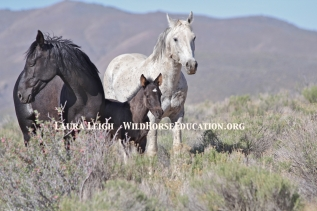 Wild Horse Family on the range in 2014 needs us to do our part and prepare the next generation