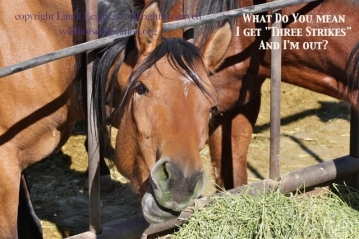 Many wild horses slip through the cracks. Particularly those that are kept out of public view