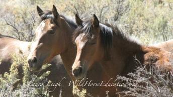 Twin Peaks wild horses