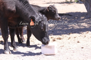 Non-permitted livestock use on NV rangeland in 2014 (illegal use)