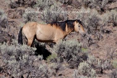 Same stallion, August 2014