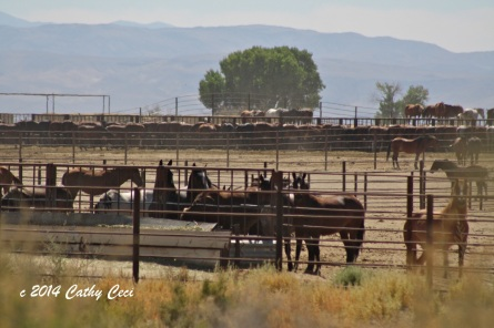 "BLM ""off limits"" Broken Arrow facility in Fallon, NV"
