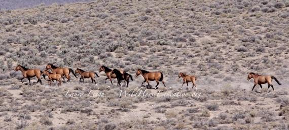Carter horses