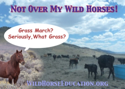 In 2012 we began to document resource issues extensively. We engaged in a campaign to educate the public to maneuvers by the livestock industry, like the